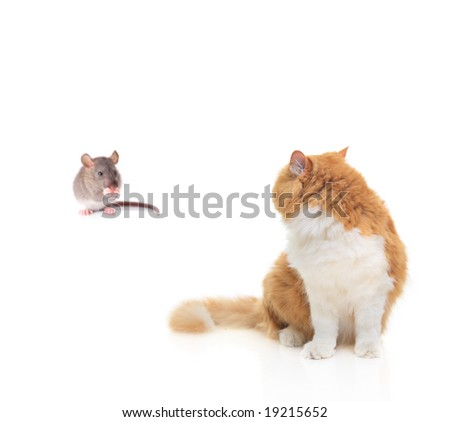 Cat watching a mouse isolated against white background