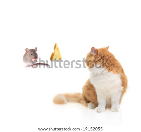 Cat watching a mouse nibbling some cheese isolated on white