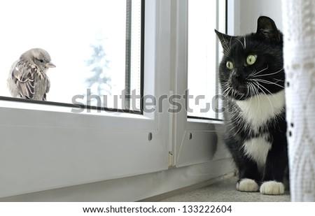 Cat watching bird on the window - stock photo