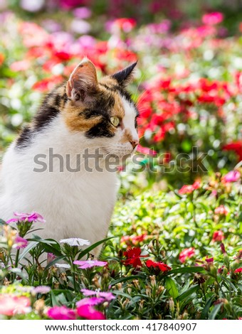 cat watching intently in pretty colored flower bed