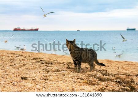 Cat watching seagulls on the beach - stock photo