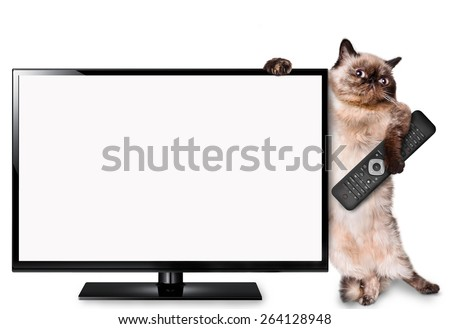 Cat watching TV - stock photo