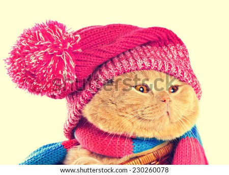 Cat wearing a pink knitting hat with pompom and a scarf. Vintage color correction. - stock photo