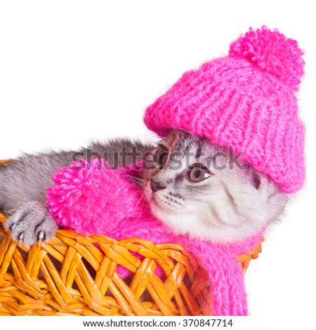 Cat wearing a pink scarf lying in a basket - stock photo