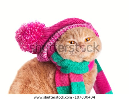 Cat wearing a scarf and hat - stock photo