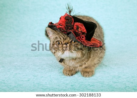 Cat wearing fancy red and black hat with feathers