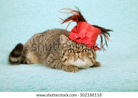Cat wearing fancy red hat with feathers - stock photo
