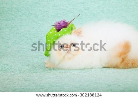 Cat wearing green floppy hat with purple flower  - stock photo