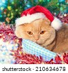 Cat wearing hat lying near snowman at Christmas background - stock photo
