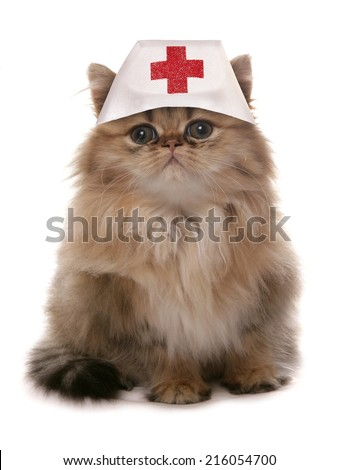 Cat wearing nurses medical hat