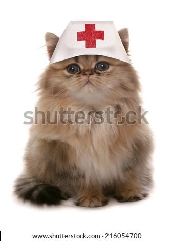 Cat wearing nurses medical hat - stock photo