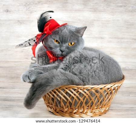 Cat wearing red hat lying in a basket - stock photo