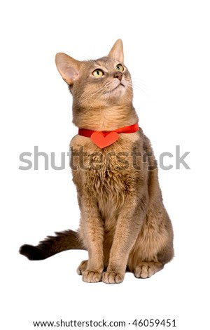 Cat wearing red heart on ribbon,  isolated - stock photo