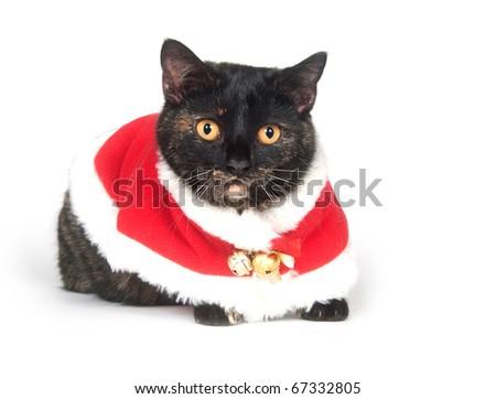 Cat wearing santa suit - stock photo