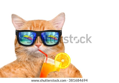 Cat wearing sunglasses relaxing in the sea background. Isolated on white. - stock photo