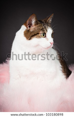 Cat white brown spotted with pink boa isolated on black background. Studio shot.