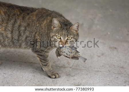 Cat with a bird in a teeth - stock photo