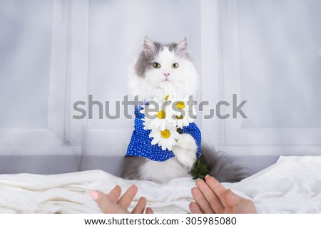 cat with a bouquet of daisies in the morning wakes owner - stock photo