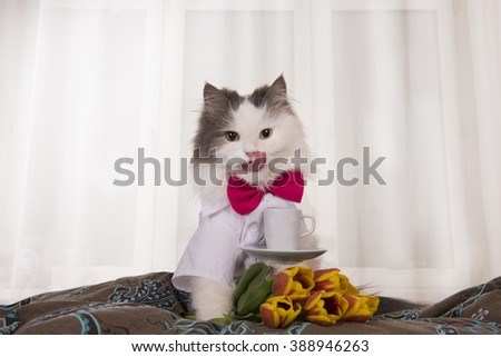 cat with a bouquet of tulips brought coffee in bed