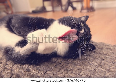 Cat with a catnip mouse - stock photo