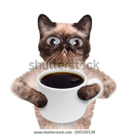 Cat with a cup of coffee. - stock photo
