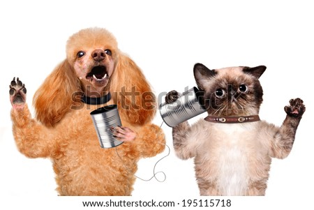 Cat with a dog on the phone with a can - stock photo