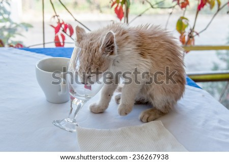 Cat with a head in a glass - stock photo