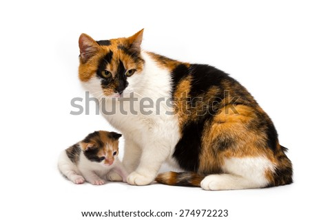 cat with a kitten on a white background