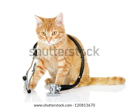 cat with a stethoscope on his neck.looking at camera. isolated on white background - stock photo