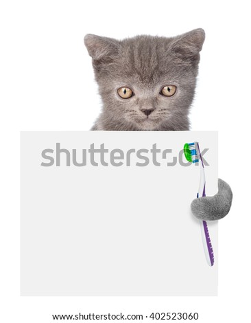 Cat with a toothbrush peeking from behind empty board. isolated on white background - stock photo