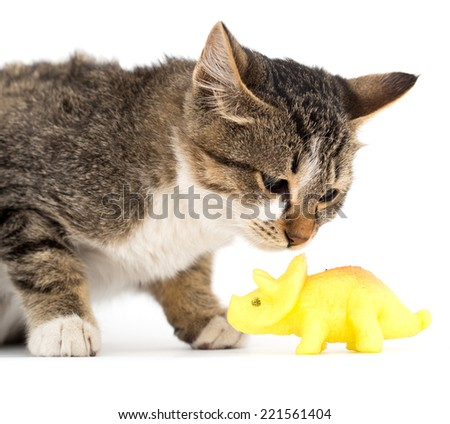 cat with a toy on a white background - stock photo