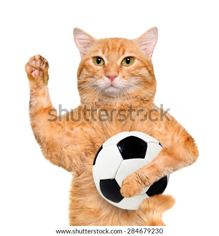Cat with a white soccer ball - stock photo