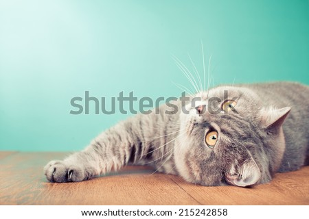 Cat with big yellow eyes laying on wood table and looking up - stock photo