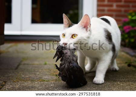 Cat with bird prey