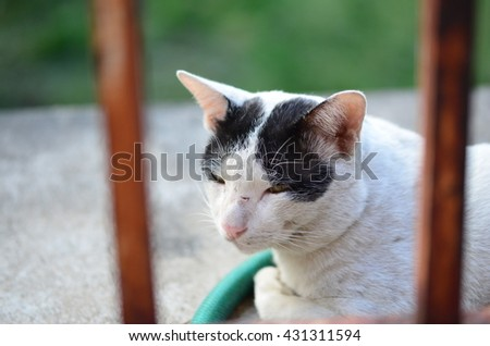 Cat with black and white