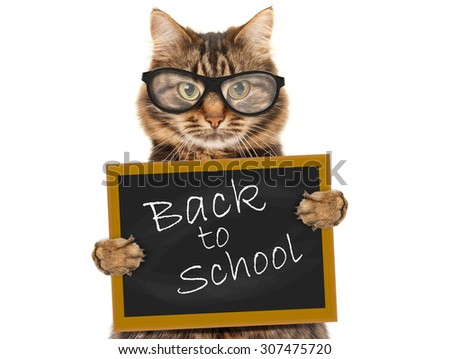 Cat with blackboard and sign Back to school - stock photo