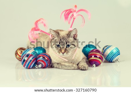 Cat with christmas decoration - stock photo
