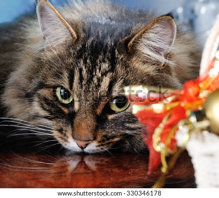cat with christmas decoration on red background - stock photo