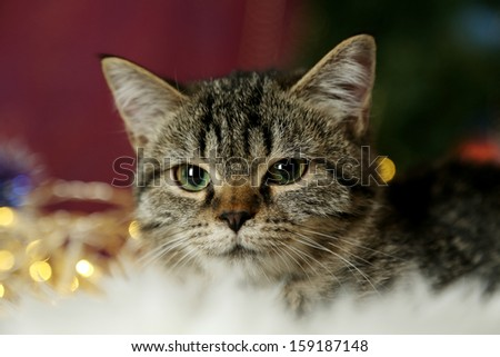 Cat with Christmas garland close-up - stock photo