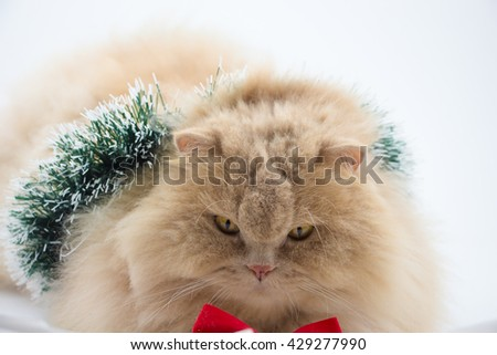 Cat with Christmas garland white background   - stock photo