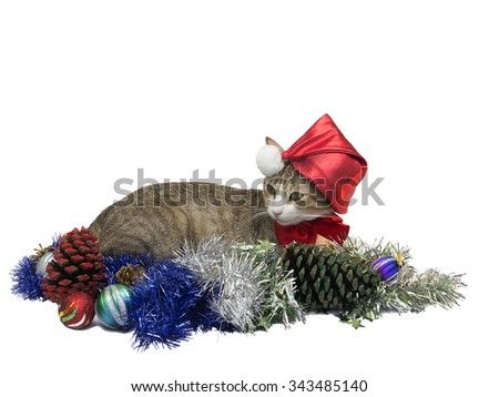 Cat with christmas santa cap. Isolated on white background - stock photo