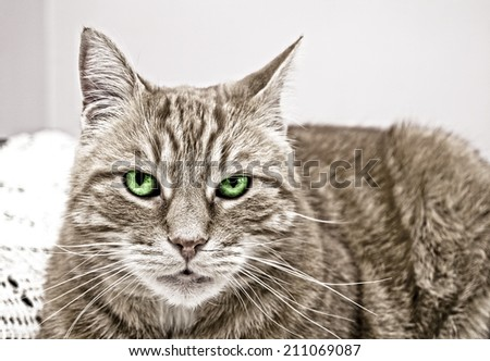 Cat with colored-in green eyes