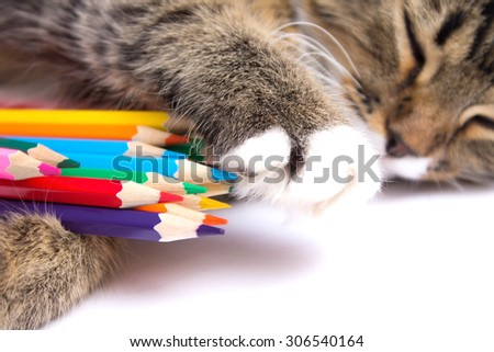 cat with colored pencils - stock photo
