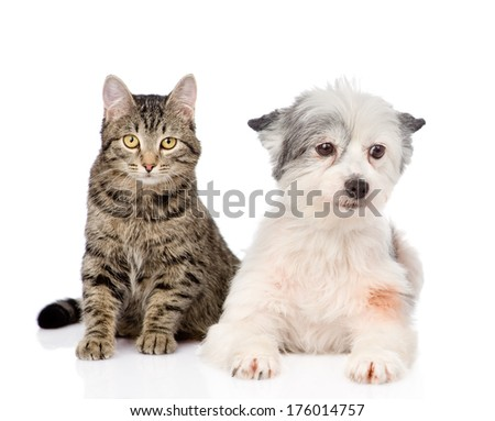 cat with dog looking at camera together. isolated on white background