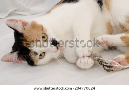 cat with favorite toy - stock photo