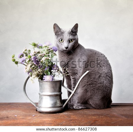 Cat with Flowers in old decorative watering can - stock photo