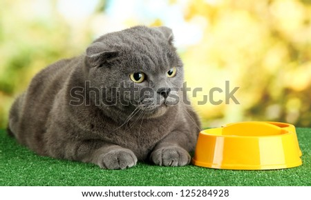 Cat with food on grass on bright background - stock photo