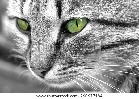 Cat with green-eyed eyes - stock photo