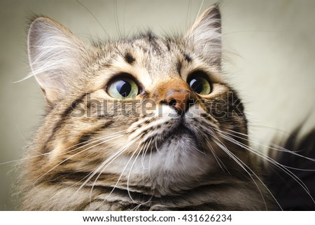 cat with green eyes, background