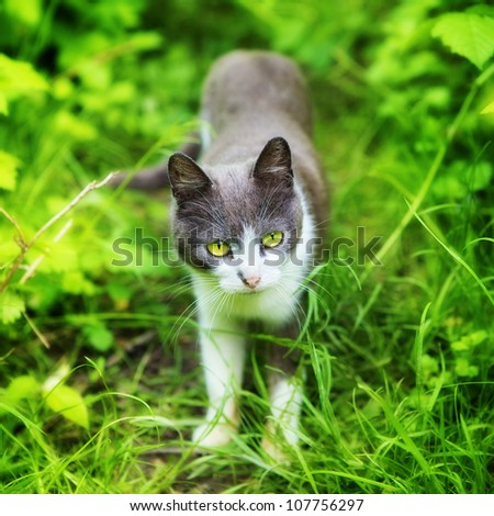cat with green eyes in grass at summer day